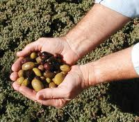 great olive tours